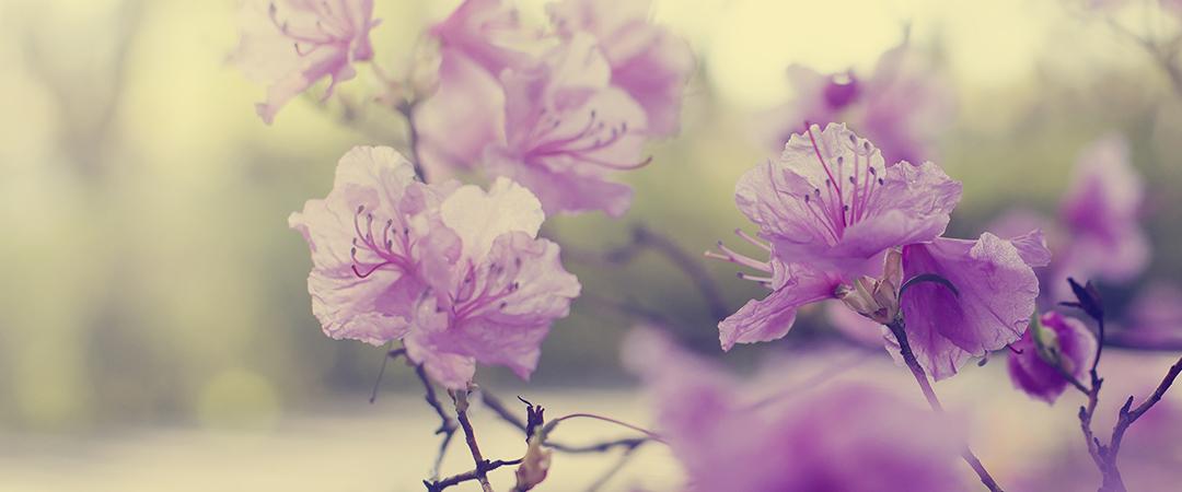 springcolors