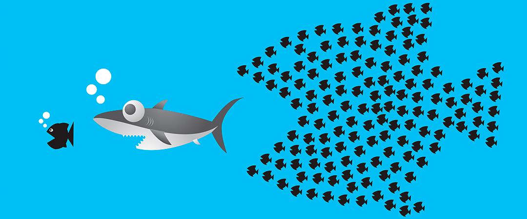 sharkfeature