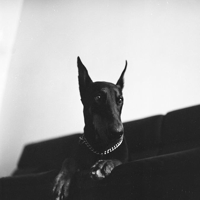 FallowLand_Pinscher_cover