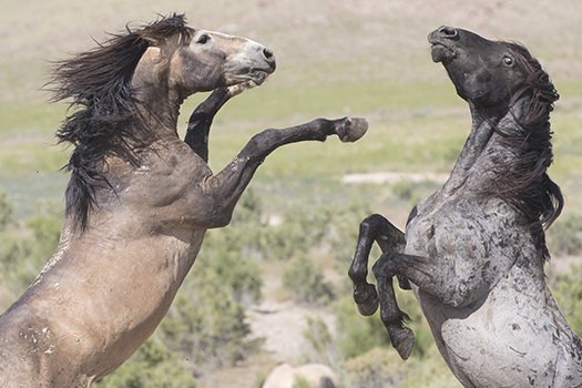 wild horses utah