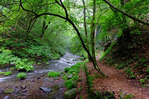 nagano forest
