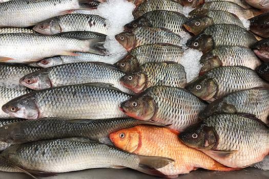 market fish shutterstock
