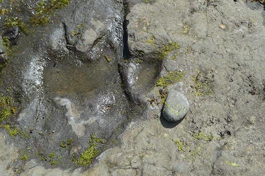 dinosaur footprint shutterstock