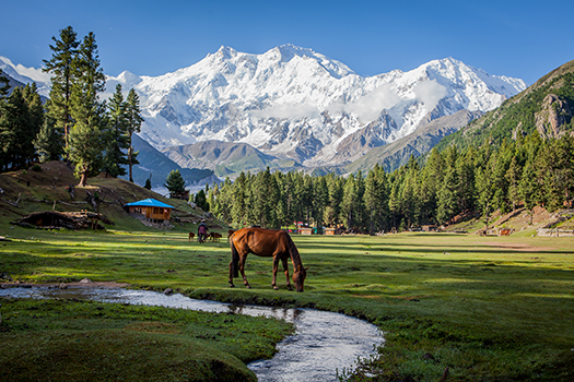 fairy meadows pakistan shutterstock