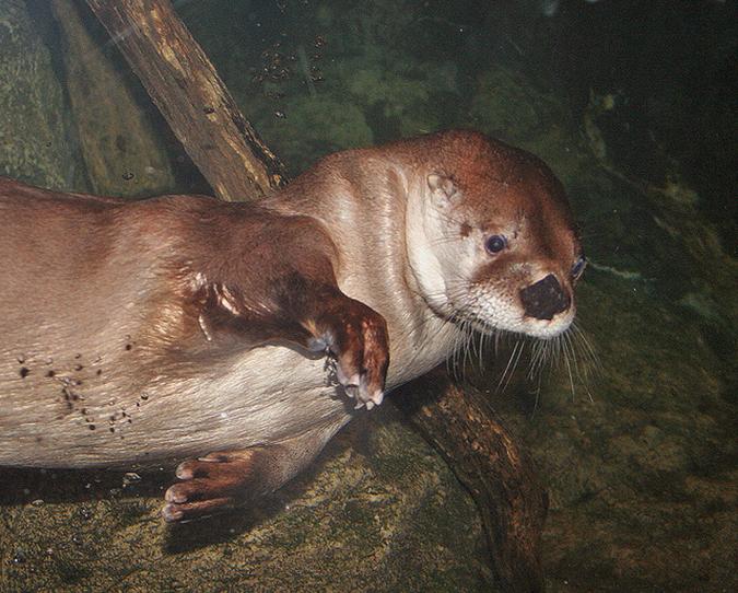 sea otter the maritime aquarium