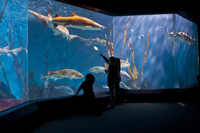 sharks the maritime aquarium
