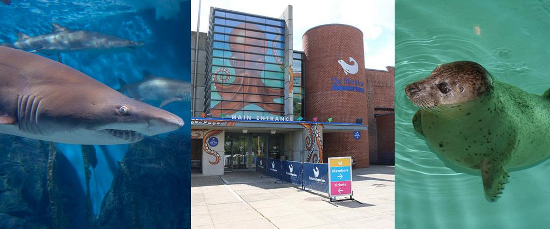 the maritime aquarium feature