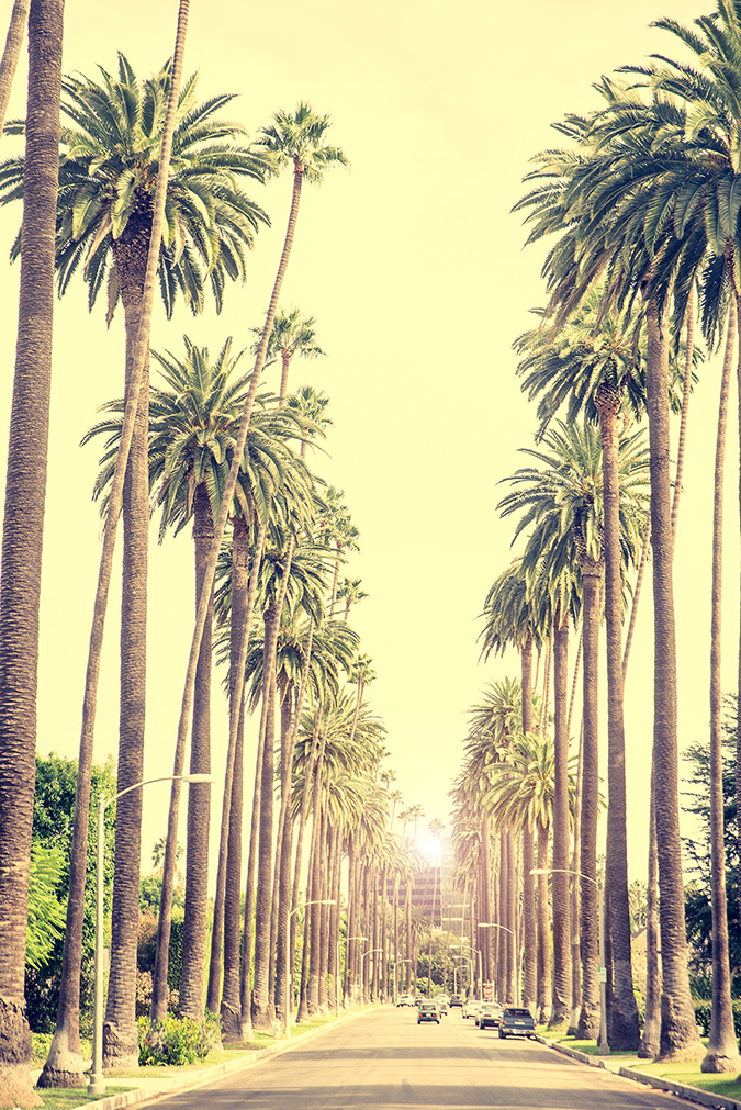 los angeles embed - oneinchpunch - shutterstock - embed