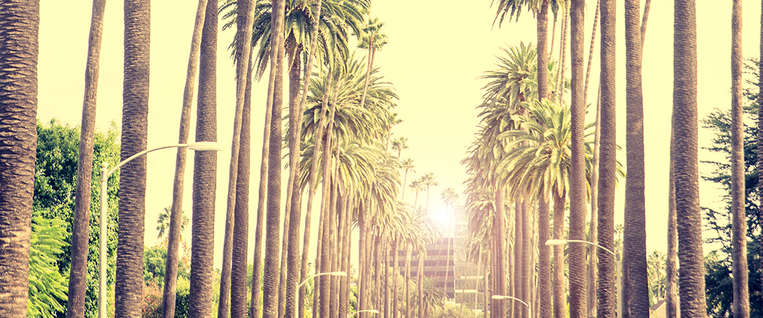 palm trees - beverly hills - los angeles - oneinchpunch - shutterstock - feature