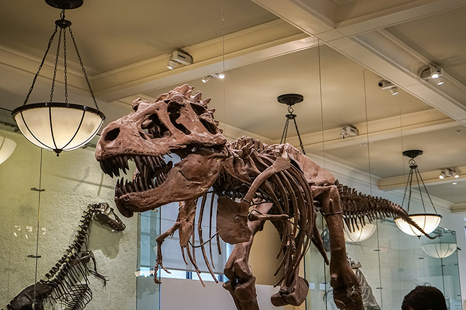 musuem of natural history - new york - dinosaurs - A.Ruiz - Shutterstock