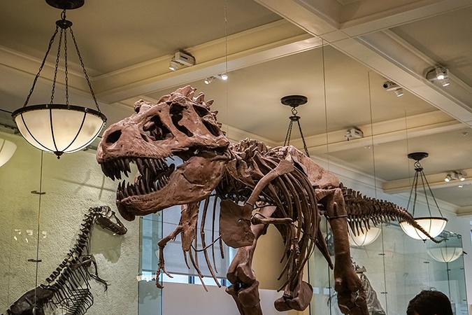 musuem of natural history - new york - dinosaurs - A.Ruiz - Shutterstock