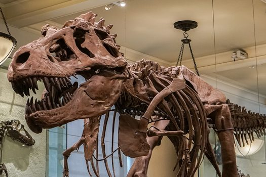 nyc dinosaur enthusiast - A.Ruiz - shutterstock