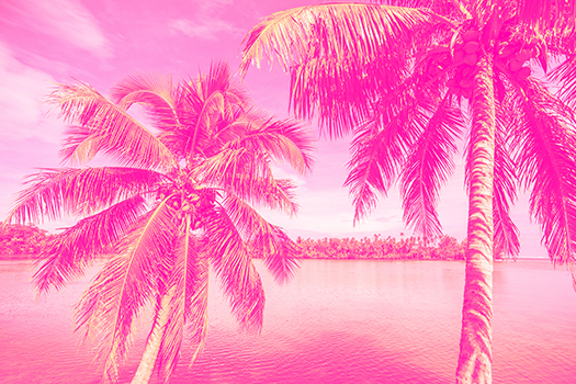 pink palms - Smallcreative - Shutterstock