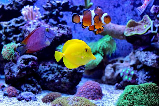 amazing coral reef aquarium - Vojce - Shutterstock