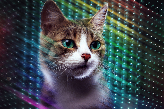 Disco Cat - Cressida studio - Shutterstock - embed