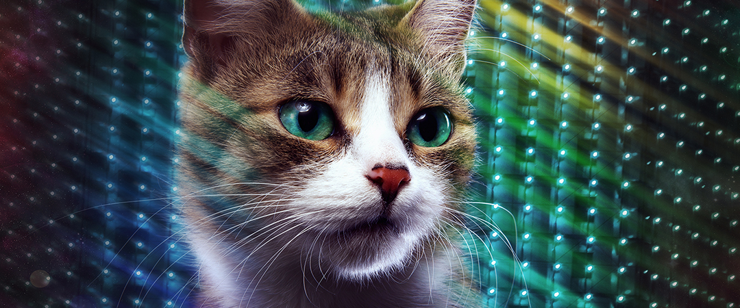 disco cat - Cressida studio - Shutterstock - feature
