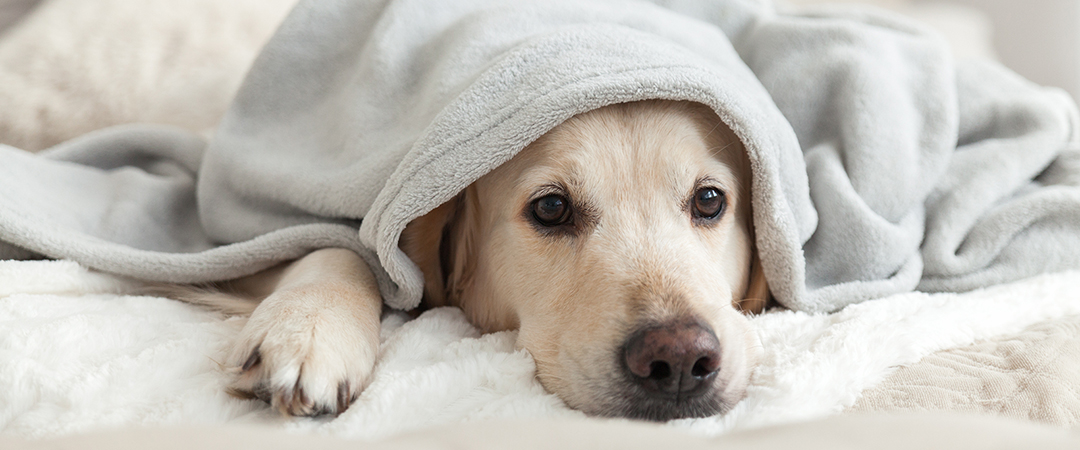 bored dog - Prystai - Shutterstock - feature