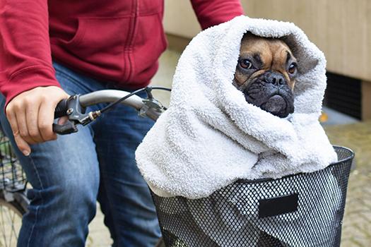 french bulldog + e t - Firn - Shutterstock
