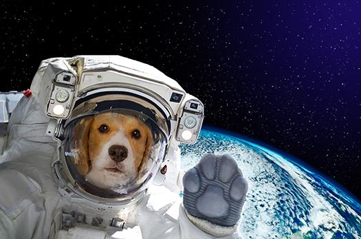 NASA dog - Sonsedska Yuliia - Shutterstock